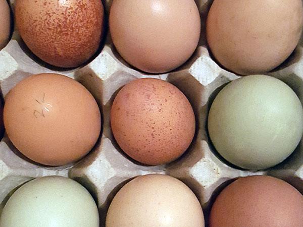 restaurant eggs